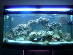 Faqs About Aquascaping Marine Systems 2